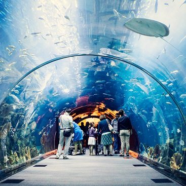 Dubai-Aquarium-Under-Water-Zoo