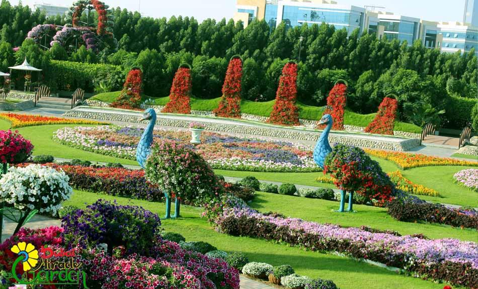miracle-garden-dubai-2