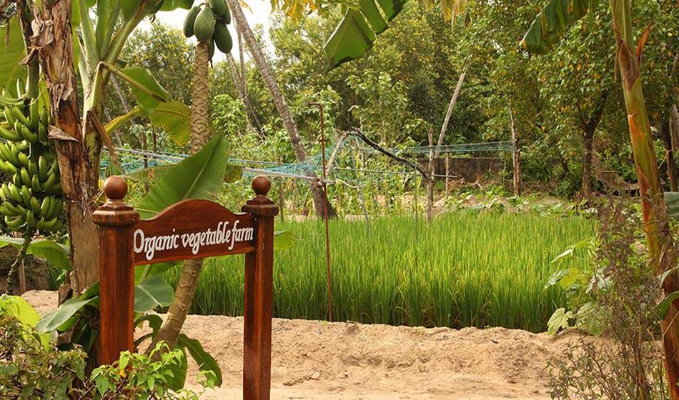 Kerala Ayurveda Rejuvenation Packages 1